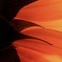 Abre tu corazón a través del masaje tántrico